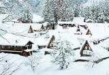 Free ski dans la neige abondante du Japon - voyages adékua